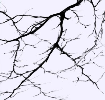 Branches by MammuthusBC
