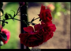 Flower... by Psychasthenique