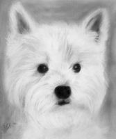 White Terrier Sketch by IsabelIntangible