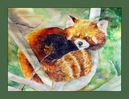 Red Panda: Who are you? by Stasushka