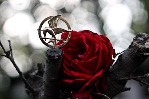Mockingjay and the Rose. by JadeGreenbrooke