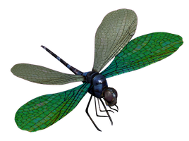 Blue Dragonfly 3D Model by ToysoldierThor