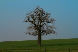 Lonely Tree by Haxonite