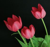 Pink Tulip Flower Stock 2 by AsiaStock