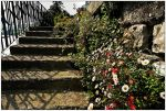Old stair with flowers by MarcoFiorentini
