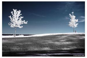 Two Trees i by escape-is-at-hand