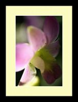 Orchid Photo 22 by blookz