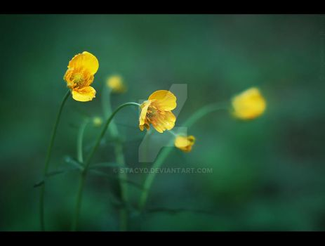 [Yellow] by StacyD