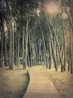 To the trees by santogc