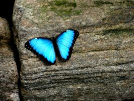Butterfly by shahar12
