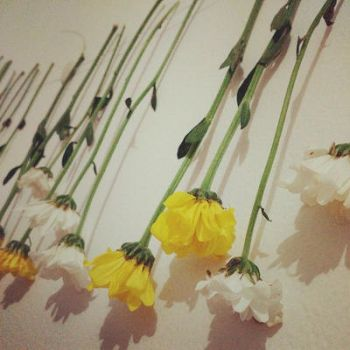 dried flower project by griesella