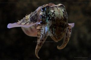 Cuttlefish by Sam2103
