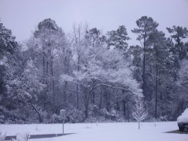 snow in MB SC 2-13-2010 4 by unickme