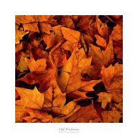 Autumn Leaves by EmilieDurand