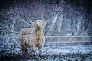 Highland by AndersStangl