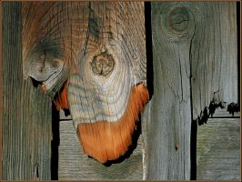 Extroverted Wood by DouglasHumphries