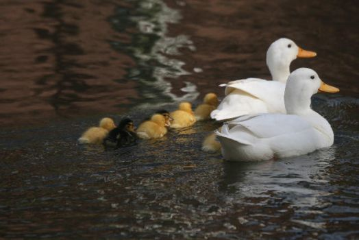 Mom, Dad and the Kids by webworm