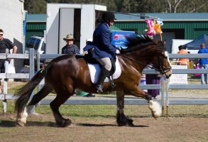 STOCK - Canungra Show 2012 197 by fillyrox