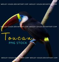 Toucan PNG Stock by Wesley-Souza
