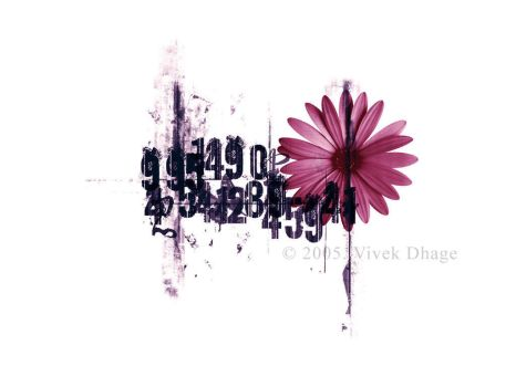 The beauty in numbers by vwake
