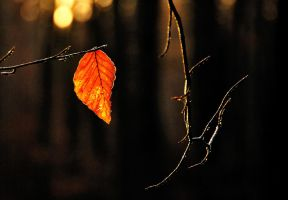 The last leaf of 2014 by jchanders