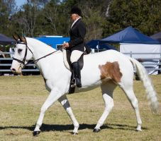 STOCK Canungra Show 2013-101 by fillyrox