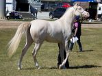 STOCK - Gold Coast show 183 by fillyrox