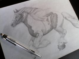 Horse Study Sketch Pt 1 by SoulAddicted