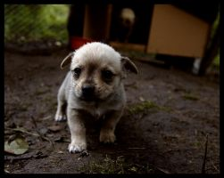 homeless puppy by mikeb79