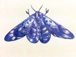 moth 2 by tong669982