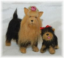 Needle Felted Yorks by noe6