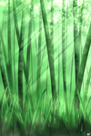 Bamboo Forest by Faedryn