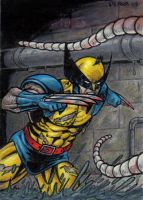 MM2 Wolverine Artist Proof by tonyperna