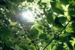 Forest Lensflare by eyefish