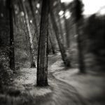 Lost in forest IV by etchepare