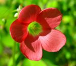 Red Petals, Green Heart by Cloudwhisperer67