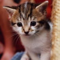 Princess by FurLined