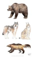 Large carnivores of Finland by Zaronen