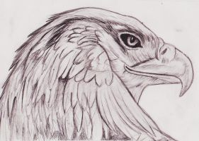 Traditional Eagle by WillwaldArt