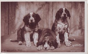 VINTAGE Dogs 07_quaddles by quaddles
