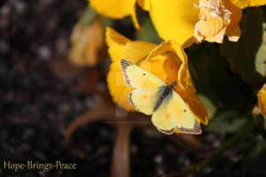 Yellow Butterfly by Hope-Brings-Peace