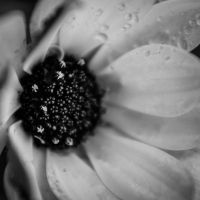 ..: May 2015 - After the rain :.. by Mademoiselle-P
