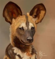 African Wild Dog Pup by Kuvari