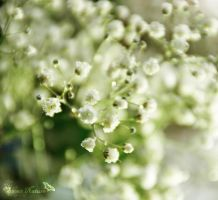 Fresh Purity by Sweet-Nature