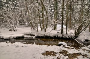 Snowy Forest With River by Burtn