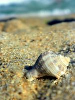 Sea shell by Reload1222