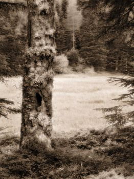 Woods Sepia by Visionary-Images