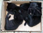 A Batch Of Kittens II by SuprMoma