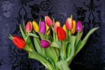 Bright Tulips by Deb-e-ann