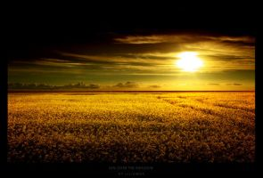 Sun over the meadow by liliumdk